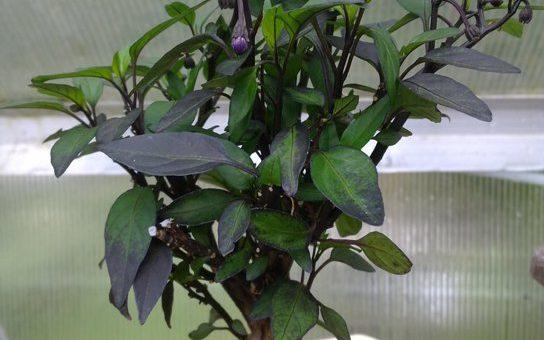 O bonsaích obecně